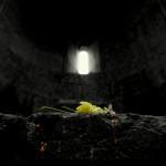 fiore armenia